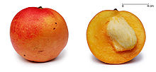 220px-Apple_mango_and_cross_section_edit1
